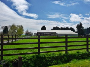 Front pasture of horse property for sale