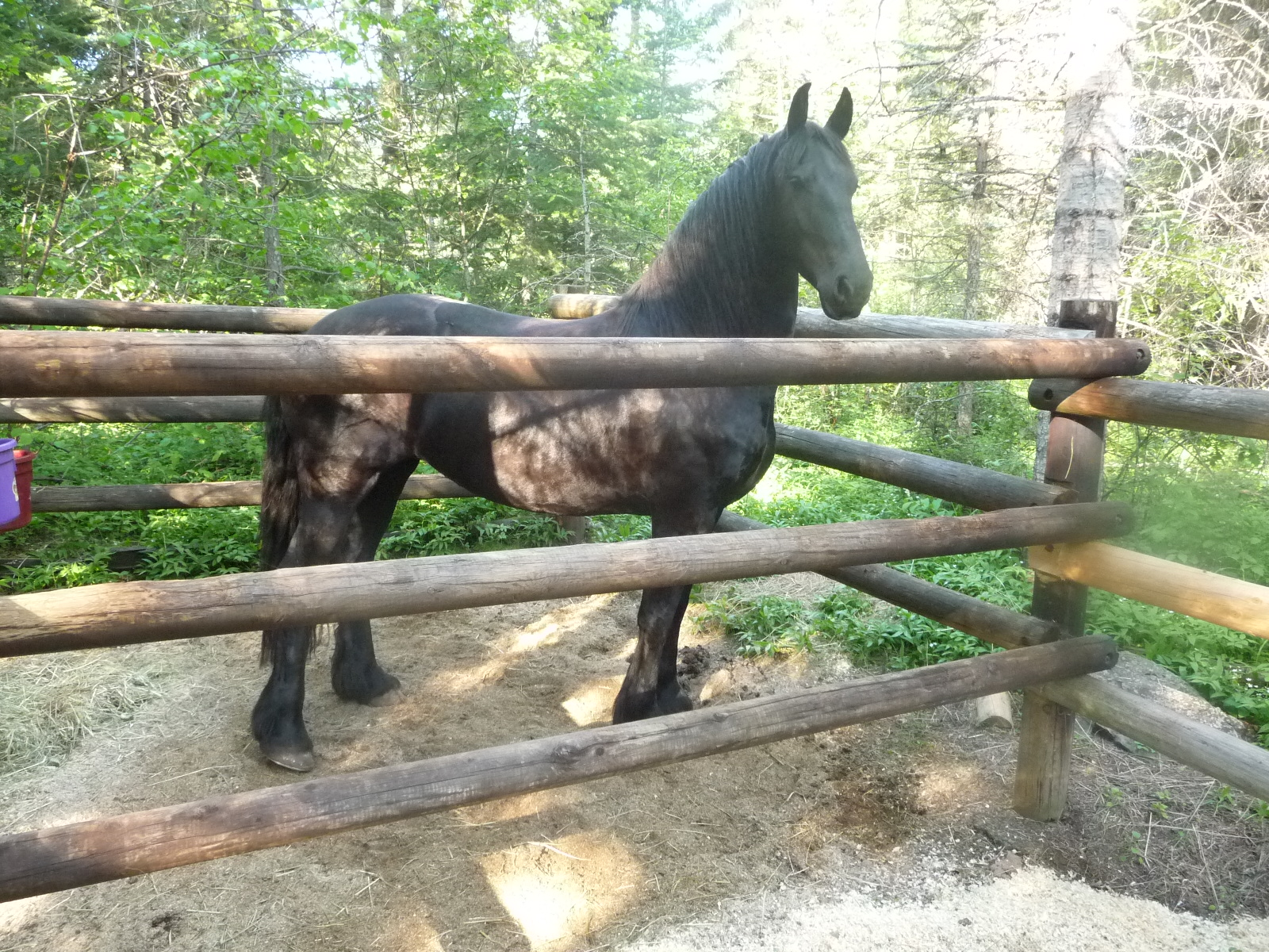 Horse Camping At Willow Prairie Campground Homes With