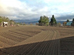 Outdoor arena, sand footing